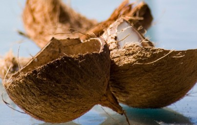 Kokos (kokosova palma)